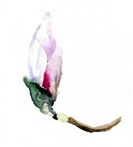 magnolia-drawing-tekening-klein